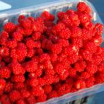 Fruit of Wineberry