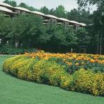 Signet Marigold Landscape