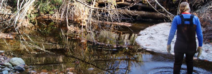 Scientist wading in stream